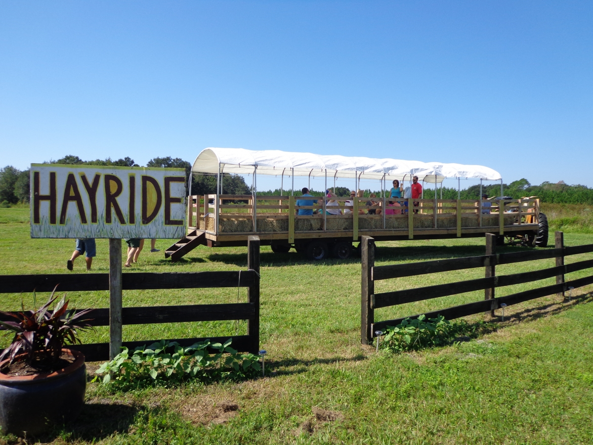 Maze Dayz Fall Festival | Cowart Ranch and Farms