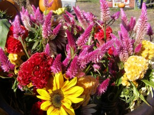 Fresh-farm cut locally grown flowers