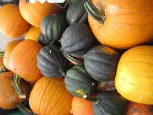 Locally grown Bunnell, Fl pumpkins