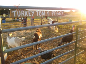 farm animals turkeys horses goats maze days family fun