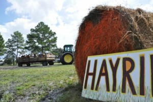 hay rides around farm
