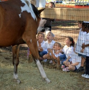kids watching the horse
